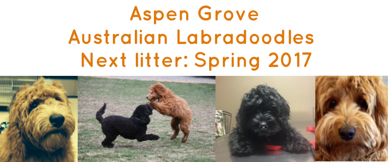 Welcome to Aspen Grove Labradoodles<br />       ALAA Gold and Silver Paw Award Breeders<br />Mini and Small-Medium Australian Labradoodles